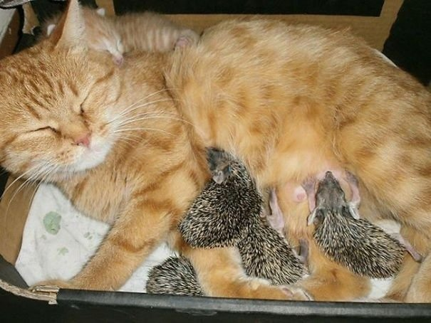 Животные, которые любят поспать вместе