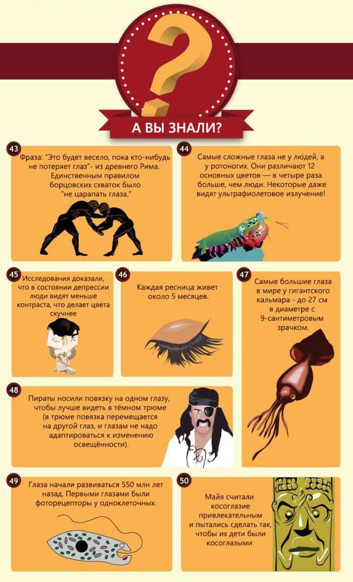 Интересные факты о глазах людей и животных