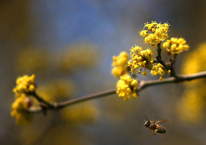 События весны в фотоподборке