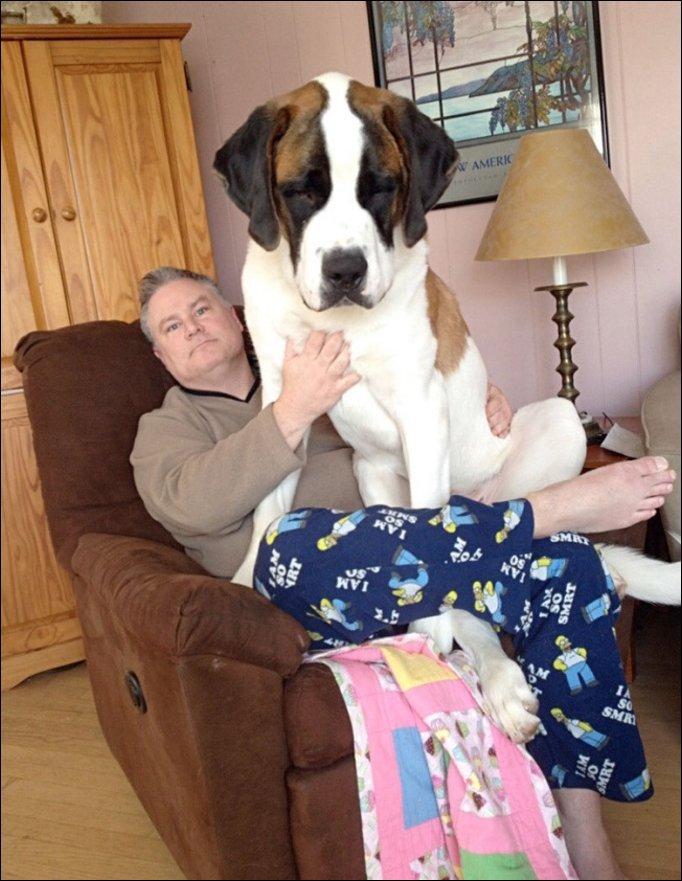 Большие собаки забыли, что они выросли
