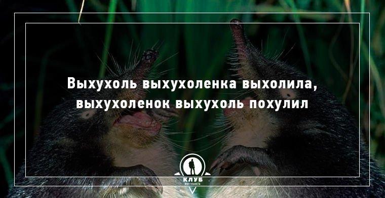 Веселые скороговорки про животных