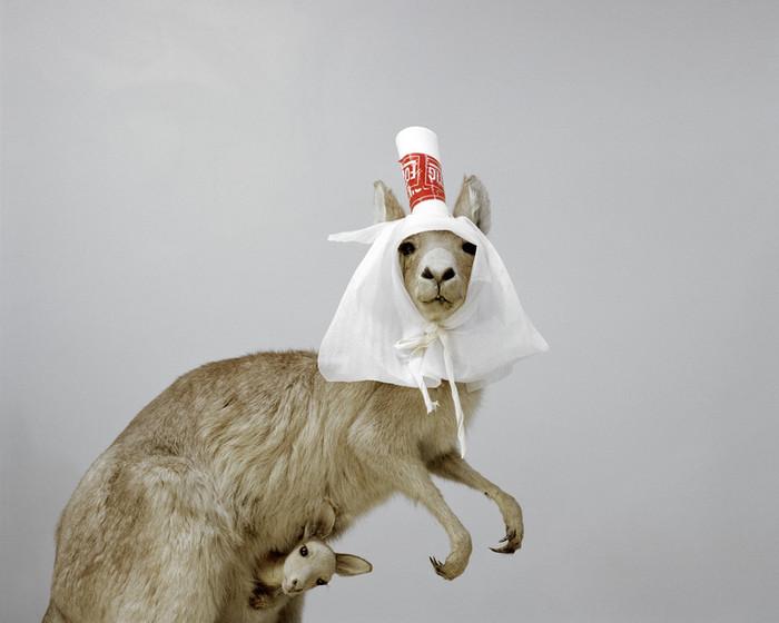 Весёлые фотографии музейных животных