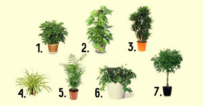 Лучшие 7 растений для очистки воздуха внутри помещения
