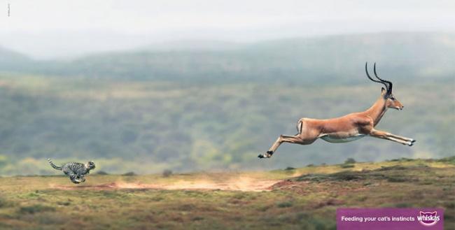 Животные и реклама
