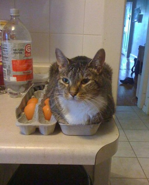 Кошки и коробки для яиц