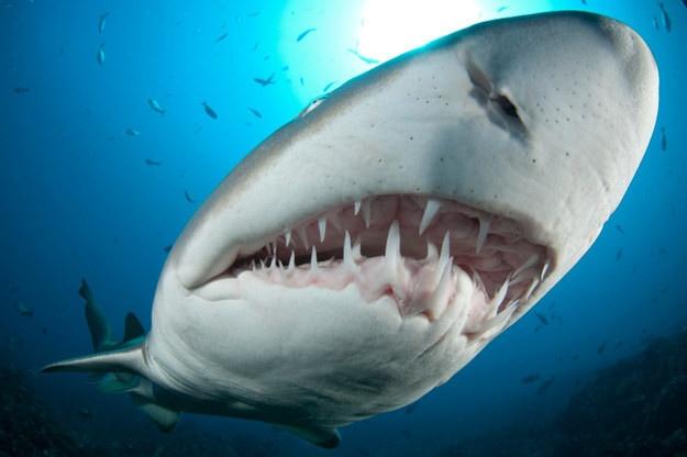 Интересные факты об акулах