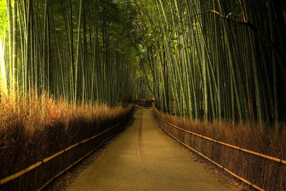 15 удивительных лесов нашей планеты