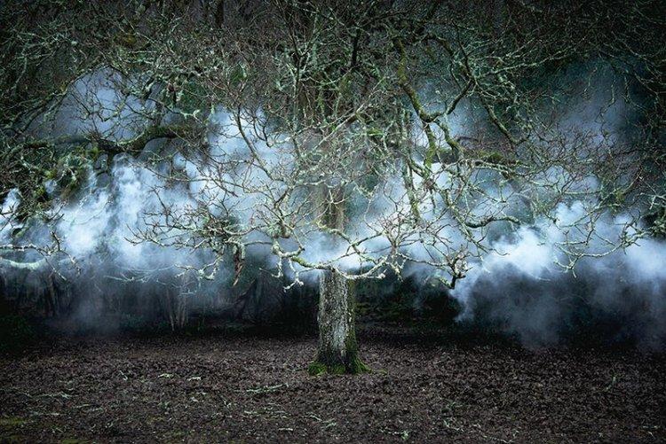 Лесные пейзажи Великобритании