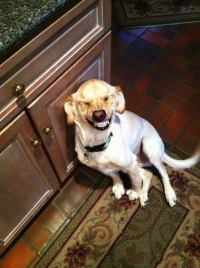 Собаки под впечатлением