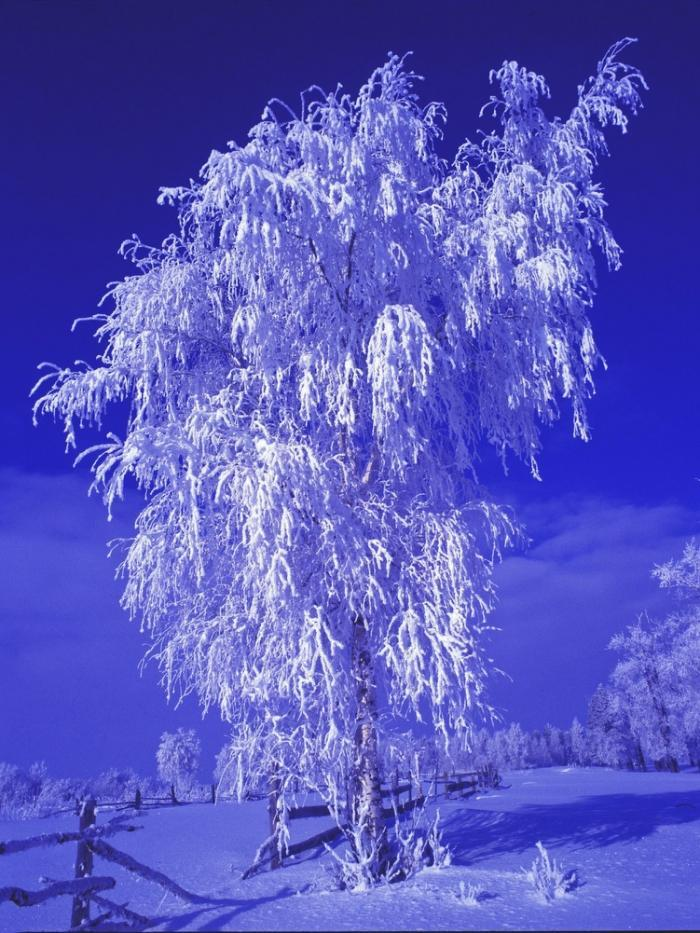 Ультрафиолет по-русски от фотографа Николая Гынгазова