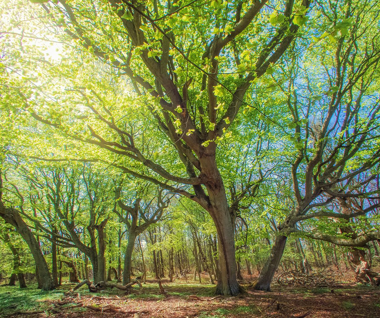 Красота весны на фотографиях