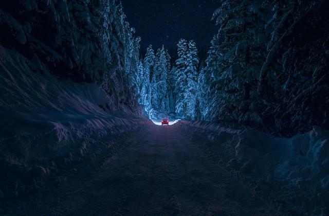 Мистические и страшные леса