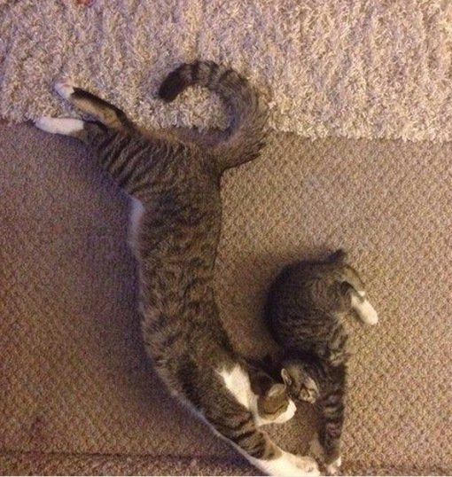 Котята и их родители