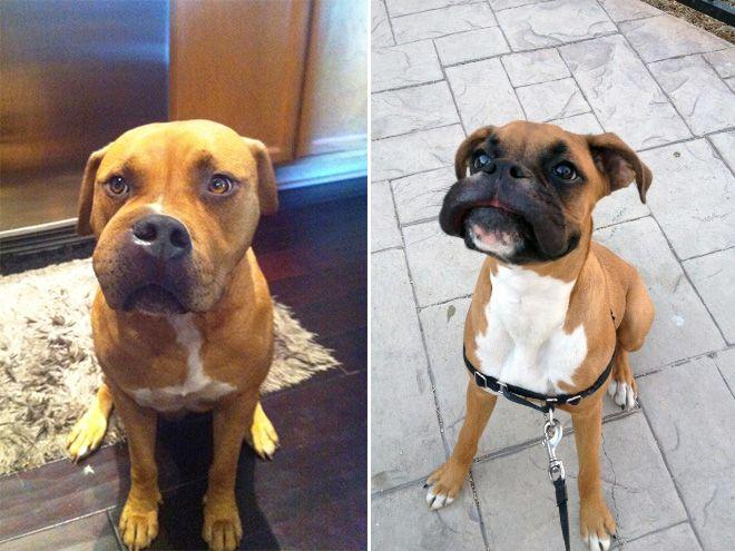 Собаки, которые съели пчелу