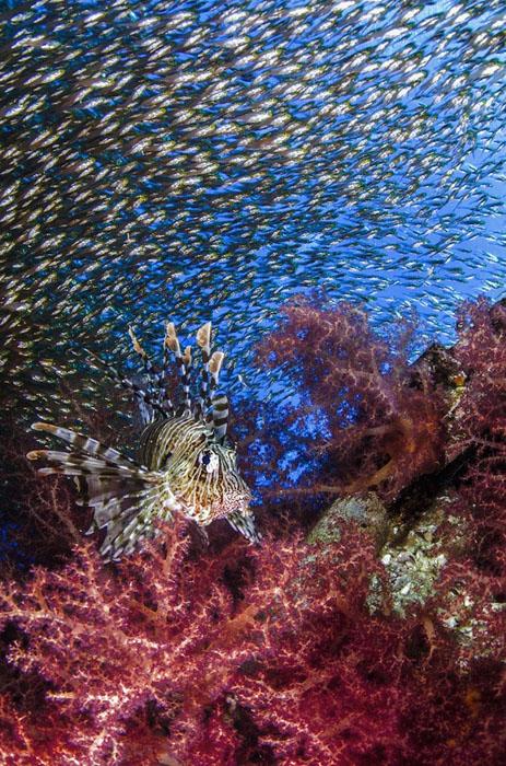 Победители конкурса подводной фотографии Underwater 2015