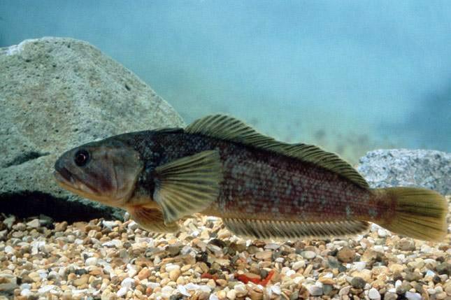 Самые удивительные рыбы