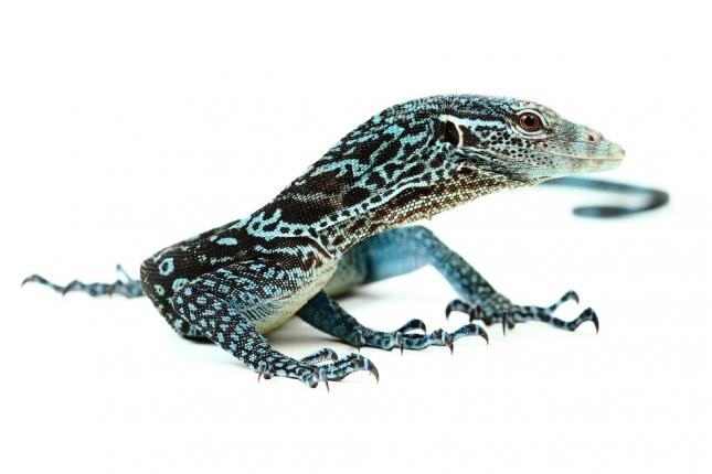 Красота рептилий от Микаэля Леджера