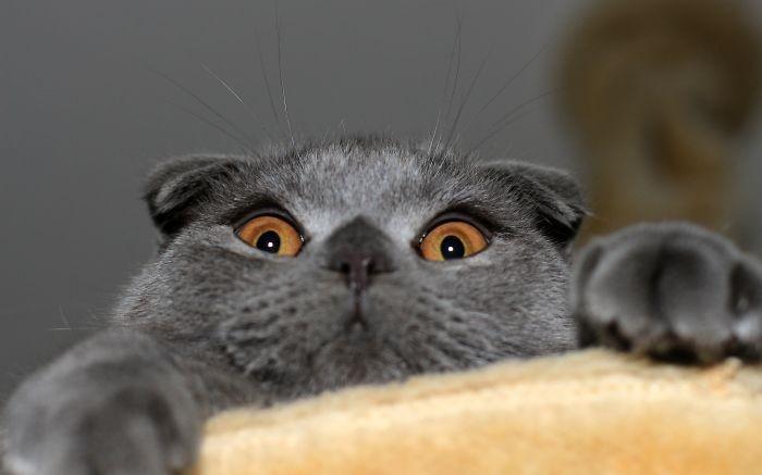 Удивленные животные на фото