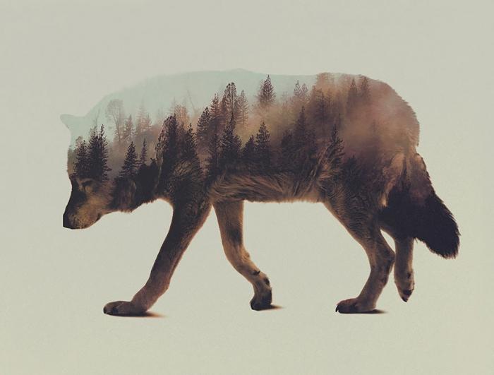 Необычные фото диких животных от Андреаса Ли