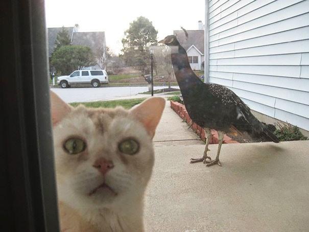 Животные просятся в дом