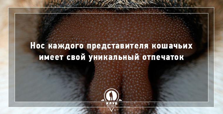 Интересные факты о кошачьих