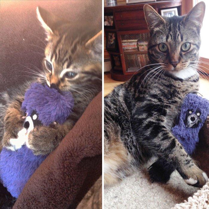 Домашние животные со своими любимыми игрушками тогда и сейчас