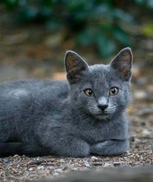 Настроения кошек и их позы