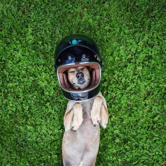 Собака путешественница