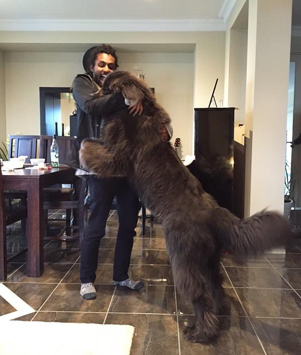 Огромные добрые собаки