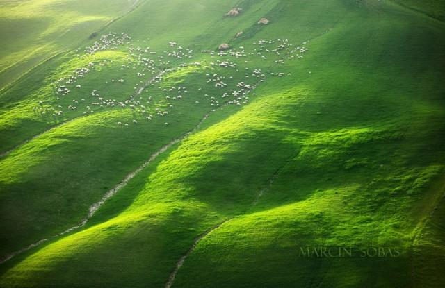 Стада овец, пасущихся на бескрайних полях Тосканы