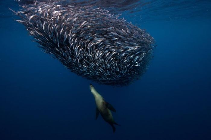 Подводные обитатели от Хорхе Сервера Хаузера