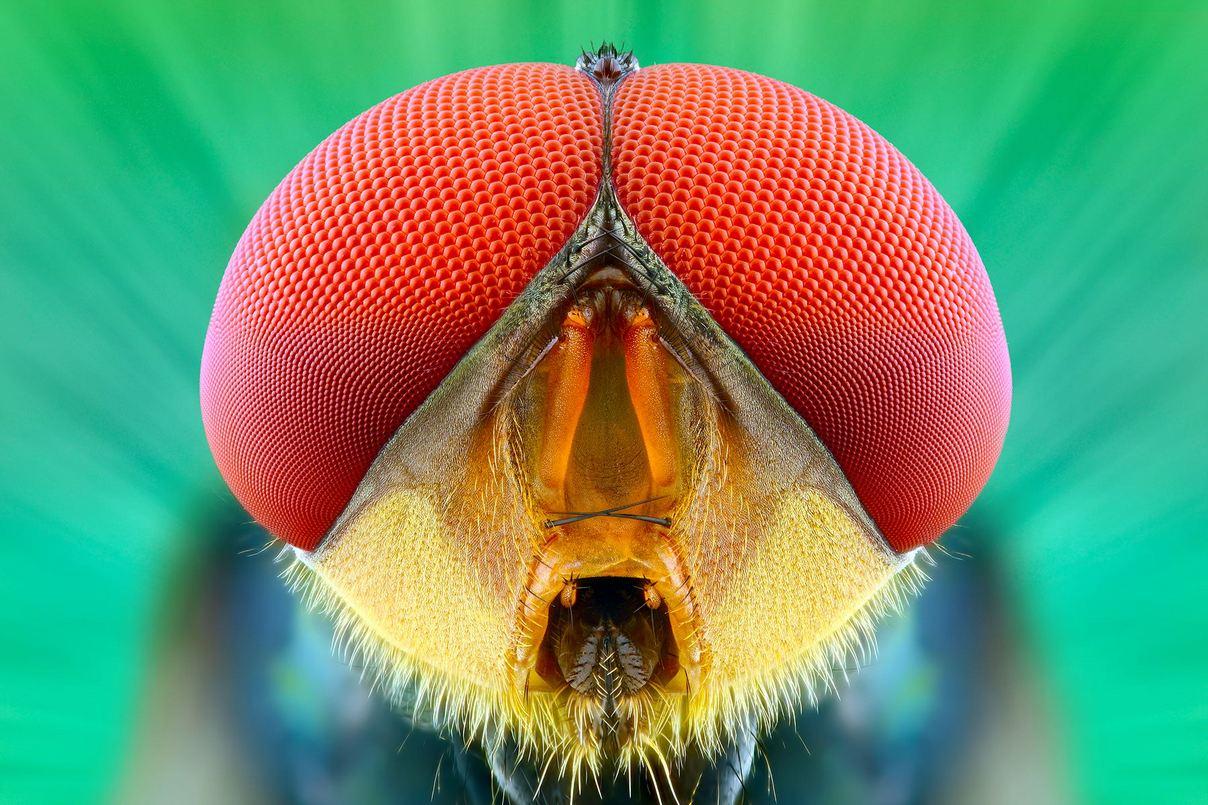 Удивительные насекомые на макрофотографиях