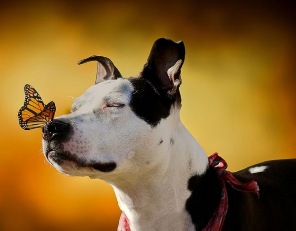 Животные и бабочки