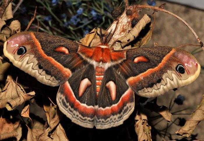 Из гусениц в бабочки