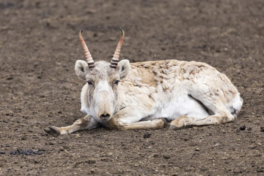 Такие разные рога животных в мире природы