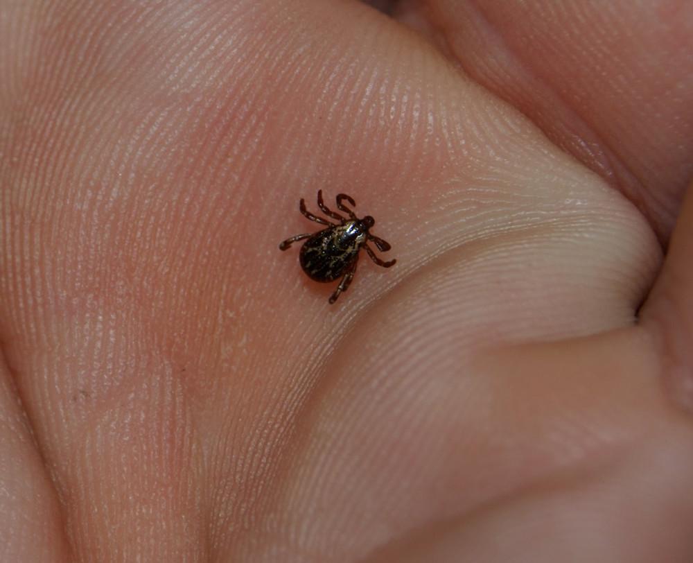 10 кровососущих насекомых планеты