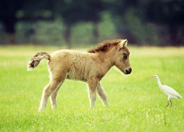 Миниатюрные лошадки