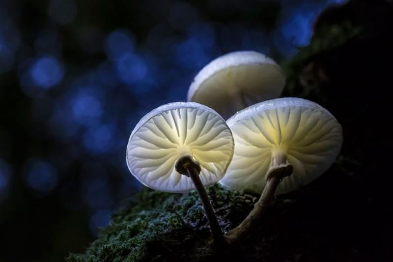 Фотографии грибов, как произведение искусства