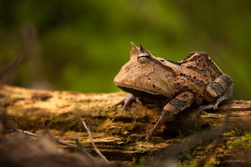 Самые необычные лягушки