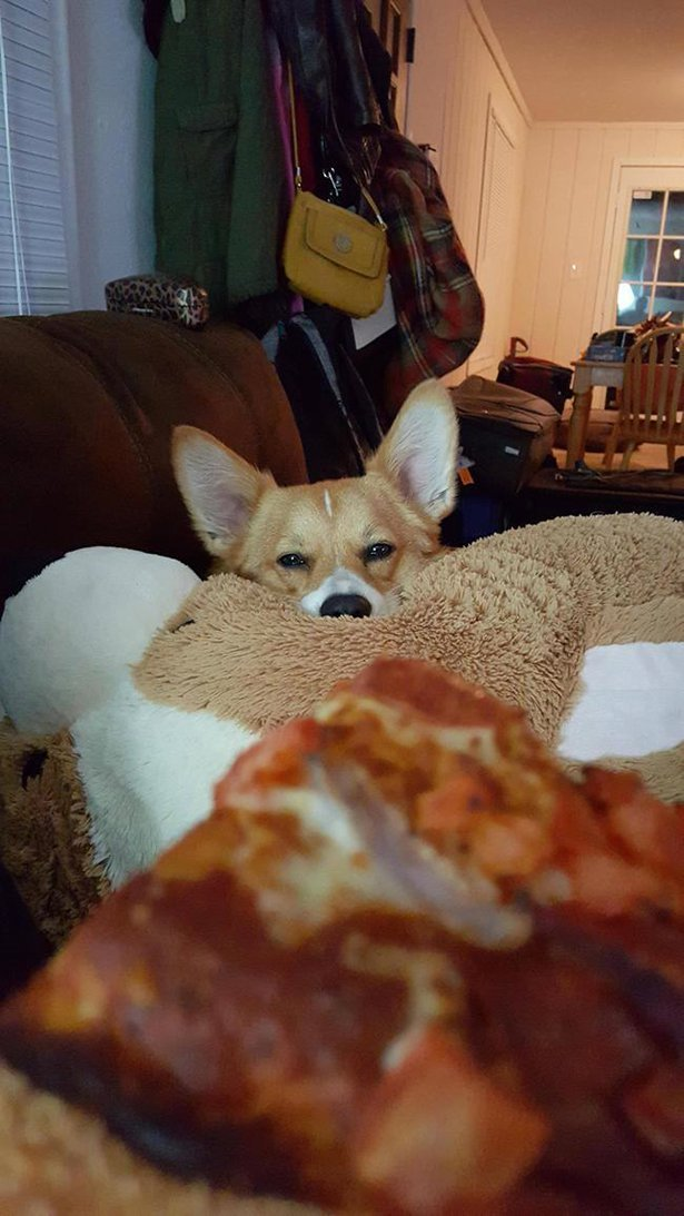 Животные не дают поесть