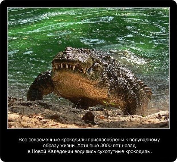 20 интересных фактов о крокодилах