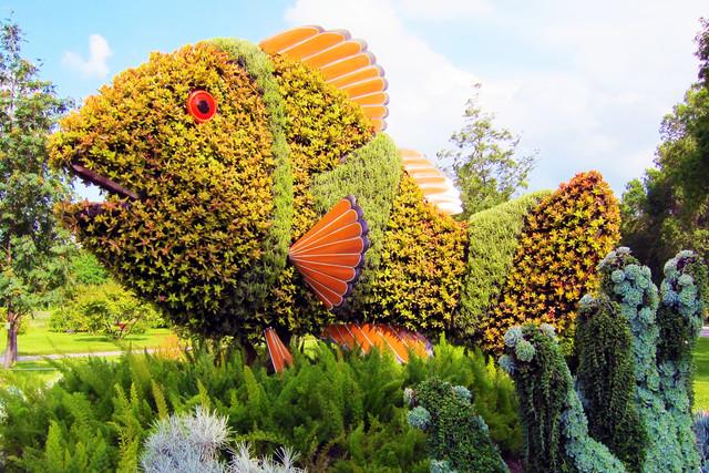 Цветущие фигуры топиари