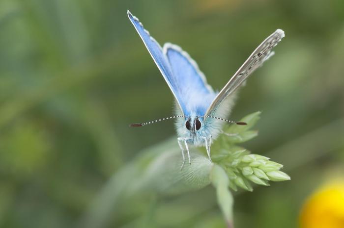 Разнообразие и красота бабочек на фотографиях
