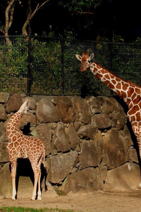10 самых лучших зоопарков мира