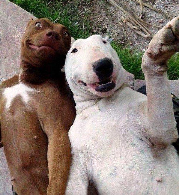 Забавные фотографии собак