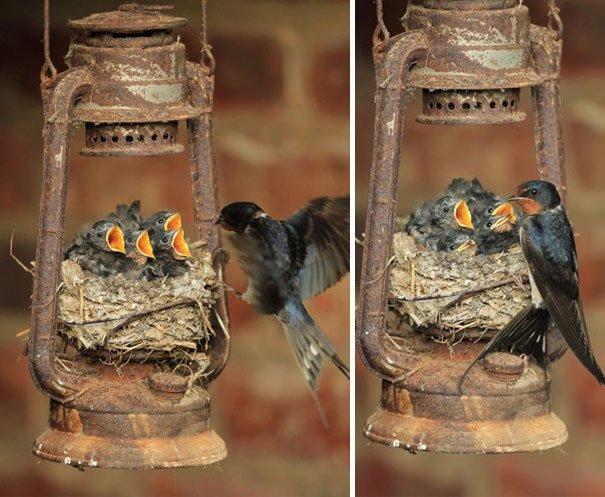Самые необычные места для птичьих гнёзд