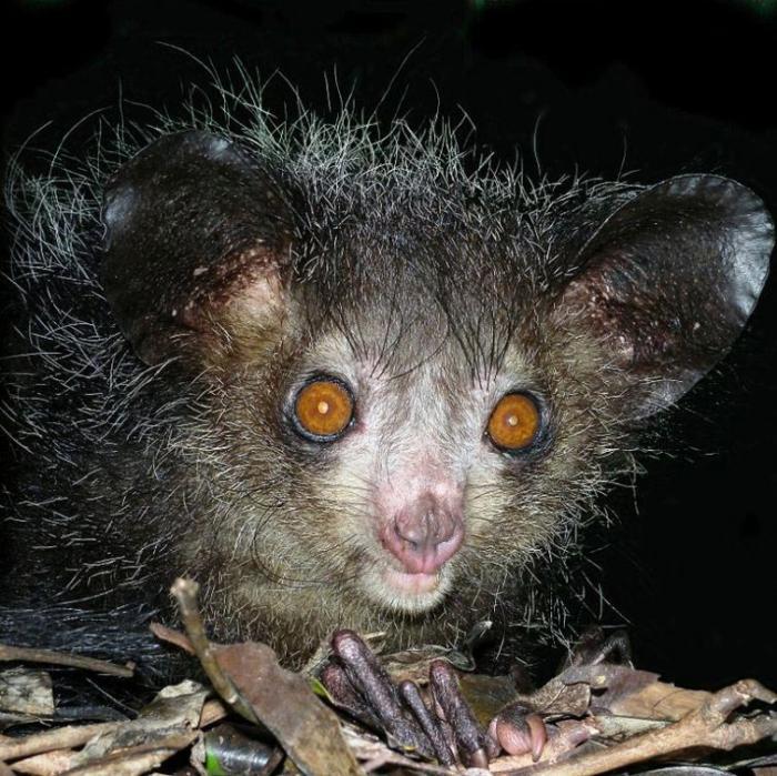 11 безвредных животных, которые выглядят пугающими