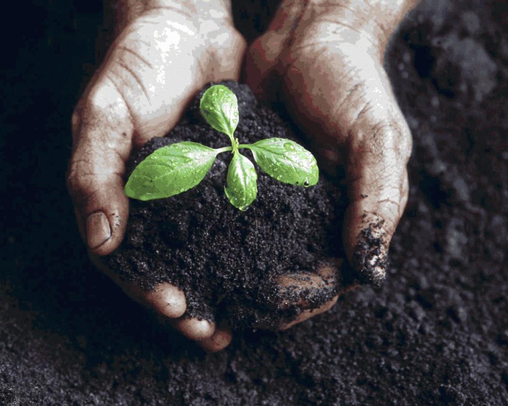 Интересные факты о сельском хозяйстве