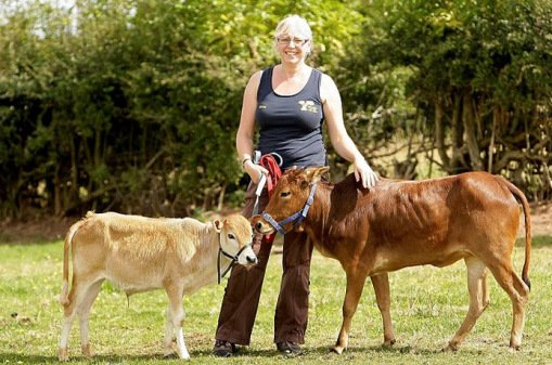 10 редких и необычных пород коров