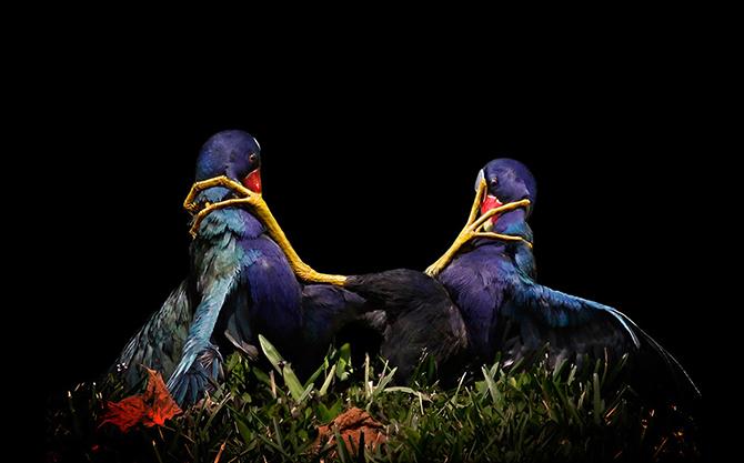Победители фотоконкурса Audubon Photography Awards 2015